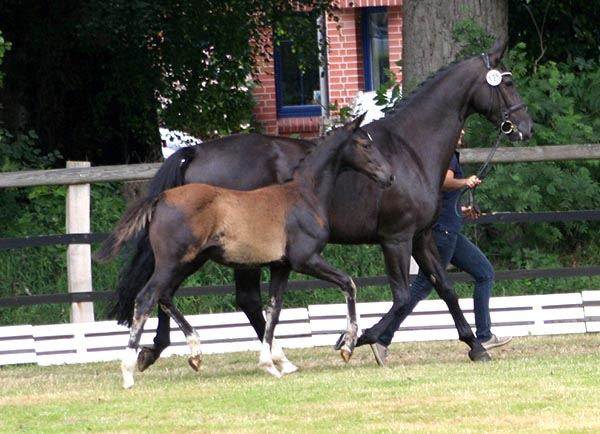 Paul schockem hle service ps foal foals don for Domon frederic